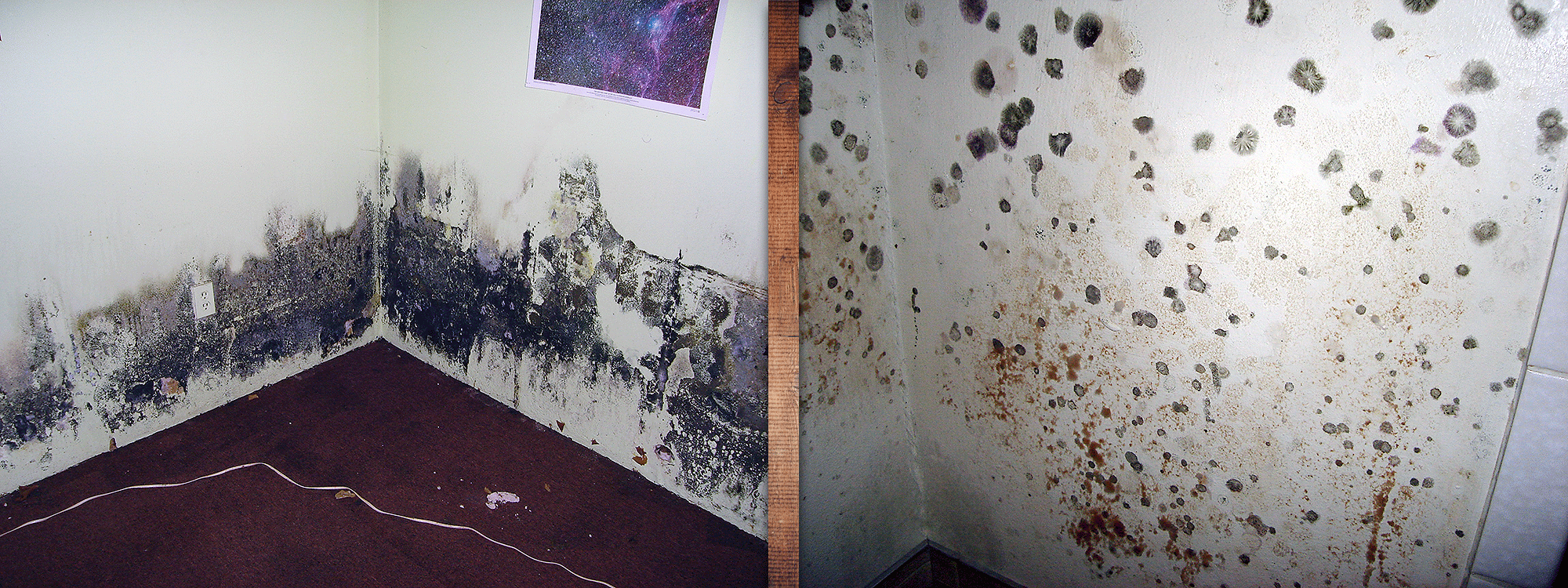 Two images of mold growing on walls
