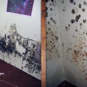Mold Growing On Walls