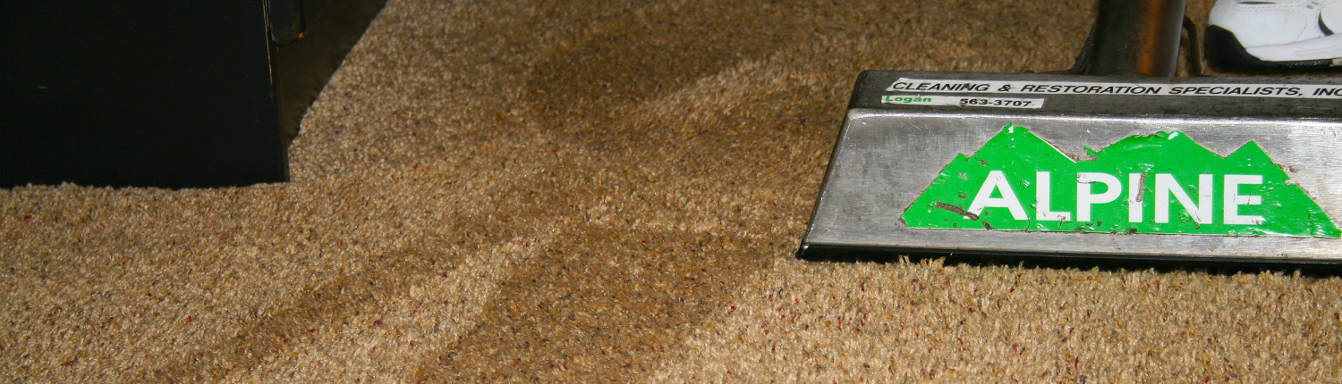 Steam Extraction Carpet Cleaning