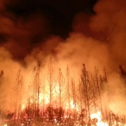 Wildfire Season safety tips